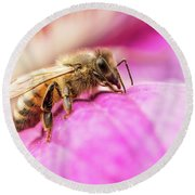 Round Beach Towel featuring the photograph Buzz by Bob Cournoyer