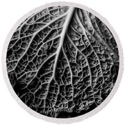 Cabbage Leaf On Old Board Round Beach Towel