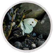 Round Beach Towel featuring the photograph Cabbage White Butterfly by Tikvah's Hope