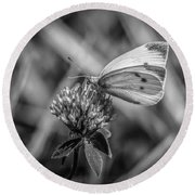 Cabbage White In Gray Round Beach Towel