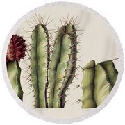 Cacti Round Beach Towel by Annabel Barrett