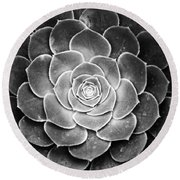 Cactus 18 Deep Bw Round Beach Towel