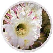 Cactus Bloom 2 Round Beach Towel
