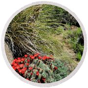 Crimson Barrel Cactus Round Beach Towel