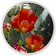 Cactus Blossom Round Beach Towel by Kathy McClure