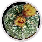 Cactus Flower 10 Round Beach Towel