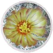 Cactus Flower 2 Round Beach Towel