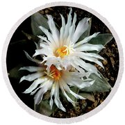 Cactus Flower 7 2 Round Beach Towel