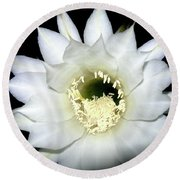 Round Beach Towel featuring the photograph Cactus Flower At Night by Randy Rosenberger