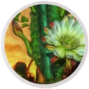 Cactus Flower At Sunrise Round Beach Towel