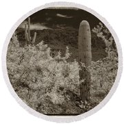 Cactus In A Different Light Round Beach Towel
