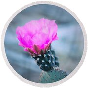 Cactus In Bloom Round Beach Towel