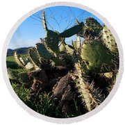 Cactus In The Mountains Round Beach Towel