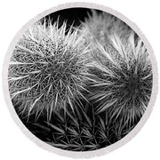 Round Beach Towel featuring the photograph Cactus Spines by Phyllis Denton
