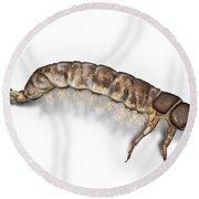 Caddisfly Larva Nymph Psychomiidae Hydropsyche Pellucidula -  Round Beach Towel