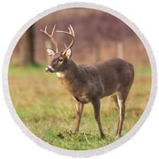 Round Beach Towel featuring the photograph Cades Cove Buck by Geraldine DeBoer