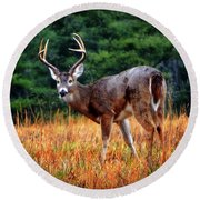 Cades Cove - The Buck Stopped Here 002 Round Beach Towel by George Bostian