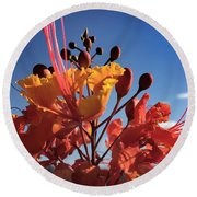 Caesalpinia Bird Of Paradise Round Beach Towel by Chris Tarpening