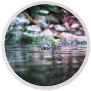 Round Beach Towel featuring the photograph Caiman by Traven Milovich