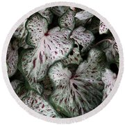 Caladium Leaves Round Beach Towel