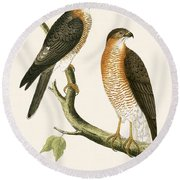 Calcutta Sparrow Hawk Round Beach Towel by English School