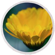 Round Beach Towel featuring the photograph Calendula by Sharon Mau
