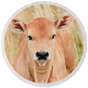 Calf In The High Grass Round Beach Towel