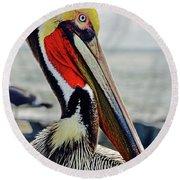 California Brown Pelican Round Beach Towel by Michael Cinnamond