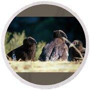 California Condors Round Beach Towel