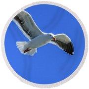 California Gull Round Beach Towel by Robert Bales