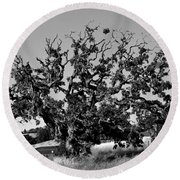 California Roadside Tree - Black And White Round Beach Towel
