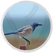 California Scrub Jay Round Beach Towel