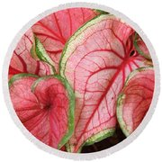 Caladium Round Beach Towel