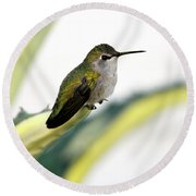 Calliope Hummingbird On Agave Round Beach Towel