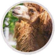 Camel Round Beach Towel
