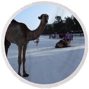 Camel On Beach Kenya Wedding 6 Round Beach Towel