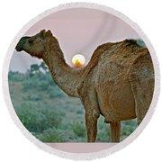 Camel Sunrise Round Beach Towel by Michael Cinnamond