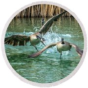 Canada Geese Chase 4906 Round Beach Towel by Tam Ryan