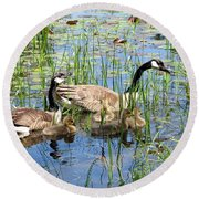 Canada Geese Family On Lily Pond Round Beach Towel