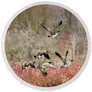 Canada Geese In Flight Round Beach Towel