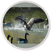 Round Beach Towel featuring the photograph Canada Goose by Ann E Robson