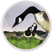 Canada Goose - Greylag Goose With Fledglings Chicks - White Fronted Goose -  Barnacle Goose Round Beach Towel