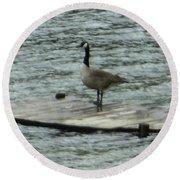 Canada Goose Lake Dock Round Beach Towel