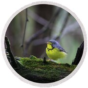 Round Beach Towel featuring the photograph Canada Warbler by Gary Hall