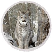Canadian Wilderness Lynx Round Beach Towel