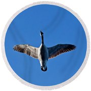Candian Goose In Flight 1648 Round Beach Towel by Michael Peychich