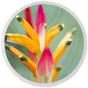 Round Beach Towel featuring the photograph Candy Colours - Heliconia Tropical Flower by Sharon Mau