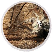 Canopy Jumping Spider Round Beach Towel