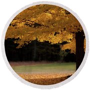 Canopy Of Autumn Gold Round Beach Towel