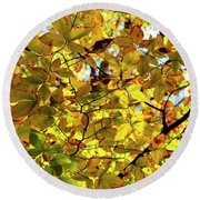 Round Beach Towel featuring the photograph Canopy Of Autumn Leaves  by Angie Tirado